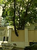 Saopaulotrees